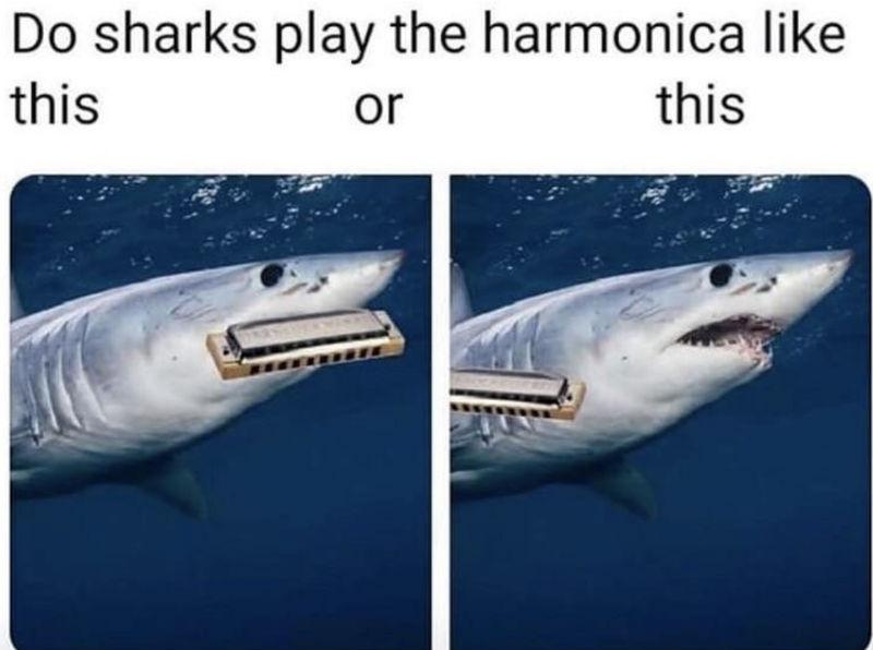 do sharks play harmonica