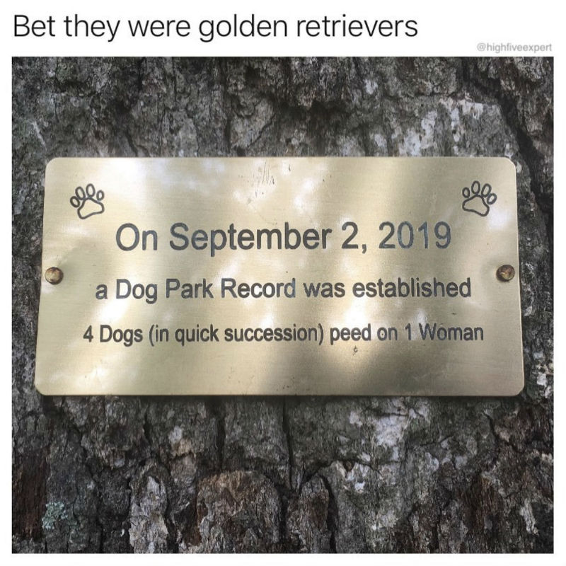 a dog park record