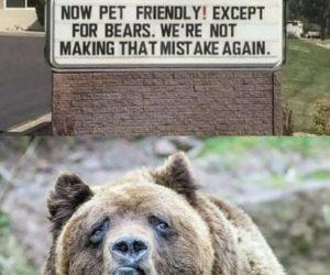 Now Pet Friendly Except For Bears – Meme