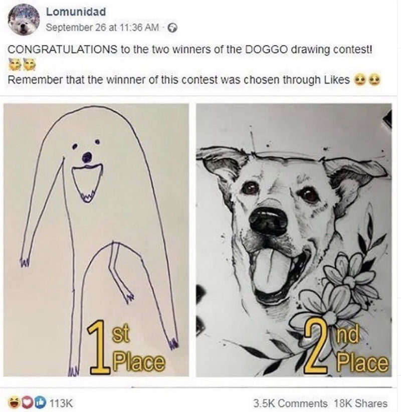 congratulations to the two doggo contest