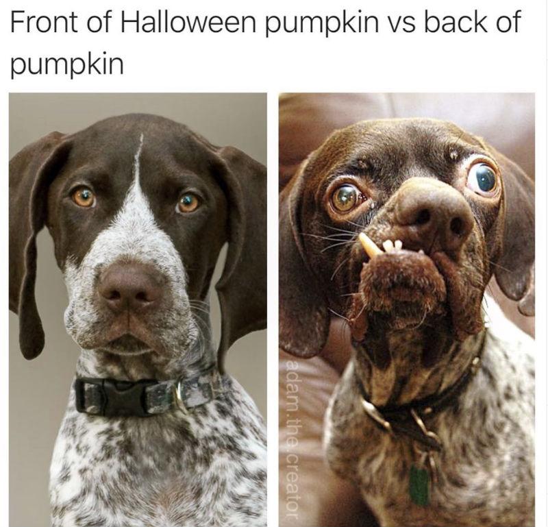 front of halloween pumpkin
