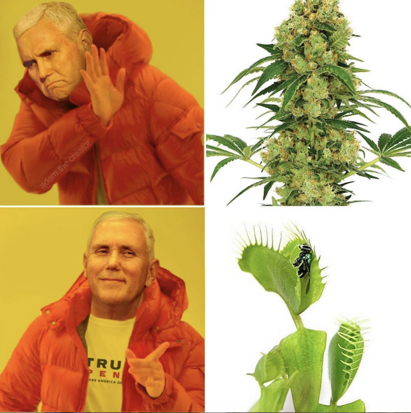 mike pence venus fly trap