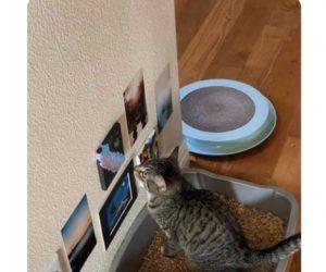 A Friend Of Mine Has Bathroom Art For Their Cat – Meme