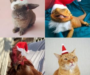 Santa Hat for Pets – Experience the joy of Christmas with this Santa Claus hat for your pets!