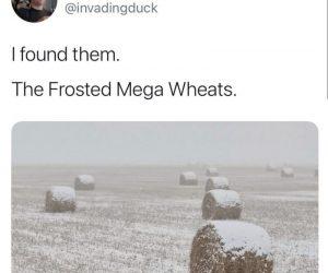 Frosted Mega Wheats – Meme