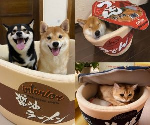 Instant Ramen Pet Bed – Make your fur babies feel comfortable with this Instant Ramen Pet Bed!