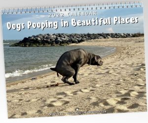 Dogs Pooping in Beautiful Places 2022 Calendar – The best gift a pet lover can get!