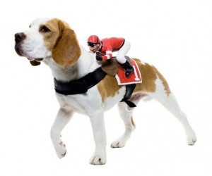 The dog riders pet costumes are a hilarious addition to any dog's wardrobe. They currently come in Jockey, Rodeo, and Headless Horseman models.