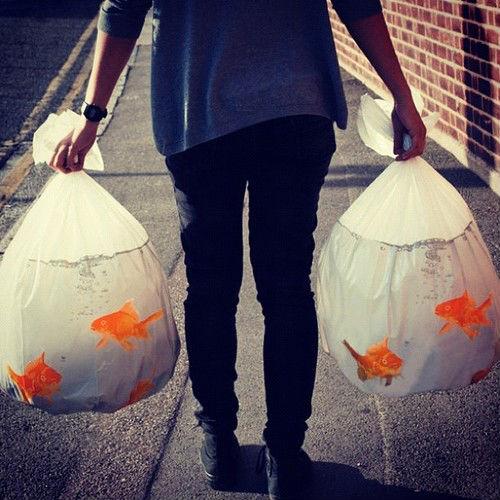 gold fish trashbags