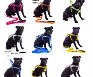 The different color leashes let people know weather your dog is friendly, working, or not good around other dogs.