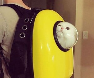 Get this cat backpack — because you want to bring that furball with you everywhere.