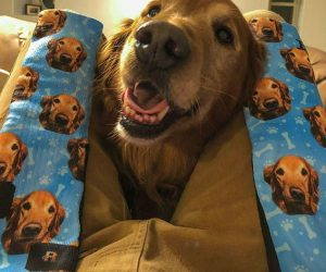 Customized Dog Socks – Put your dog's face on a pair of socks!
