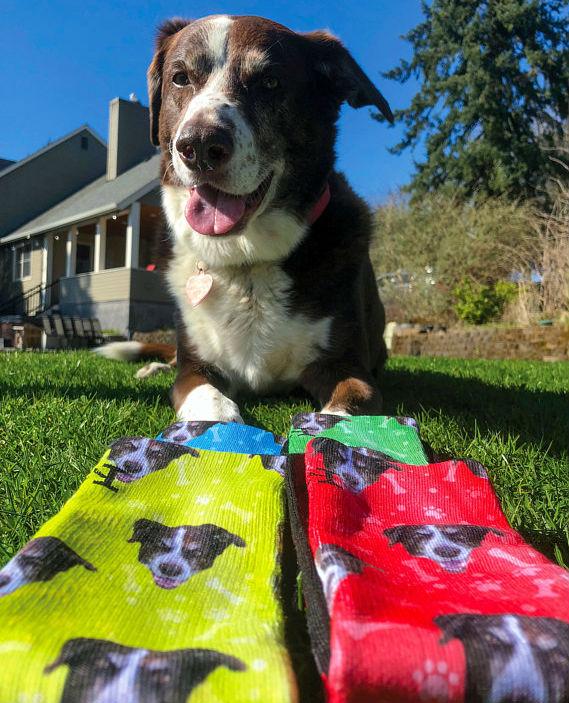 customized dog socks