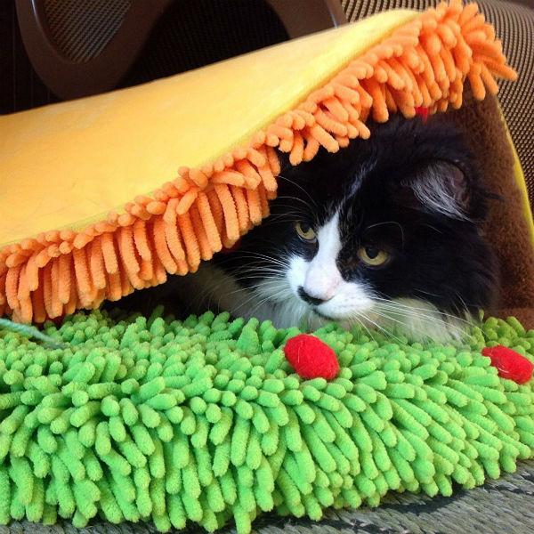 Cat Taco Bed