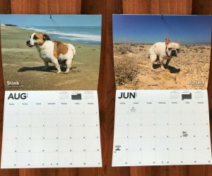 Dogs Pooping Calendar – White Elephant Party coming up? Yankee Swap? Secret Santa? Do you know someone who loves dogs…too much? This 12 month 2019 calendar of pooping dogs will