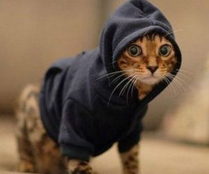 Cat Hoodie – Grab one of these hoodies and turn your cat (or dog) into the coolest pet on the block. With classic styling this hoodie includes a kangaroo pocket,