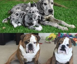 Custom Pet Stuffed Animals – Handmade plush that looks just like your pet!