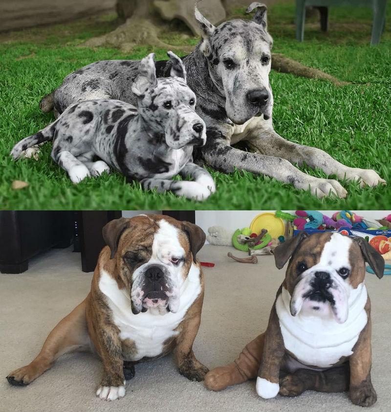 cuddle clones plush stuffed animals