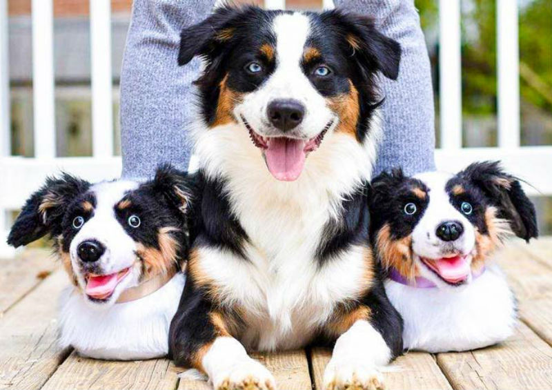cuddle clones custom dog slippers