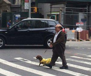 Danny Devito walking his dog in NYC
