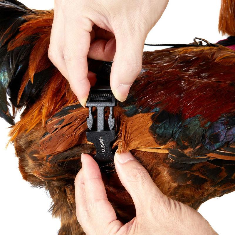 chicken harness