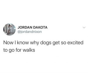 Now I Know Why Dogs Get So Excited To Go For Walks – Quarantine Meme