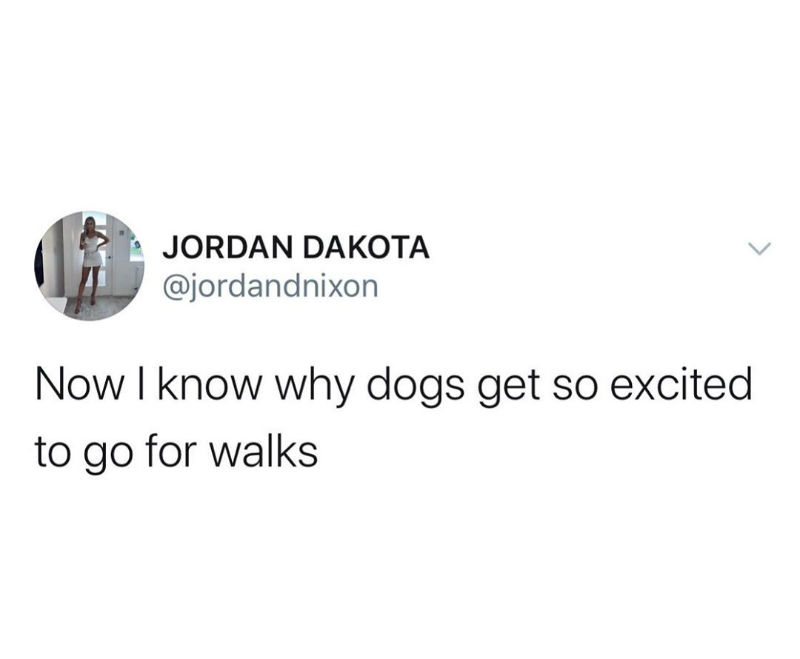 Now I Know Why Dogs Get So Excited To Go For Walks - Quarantine Meme