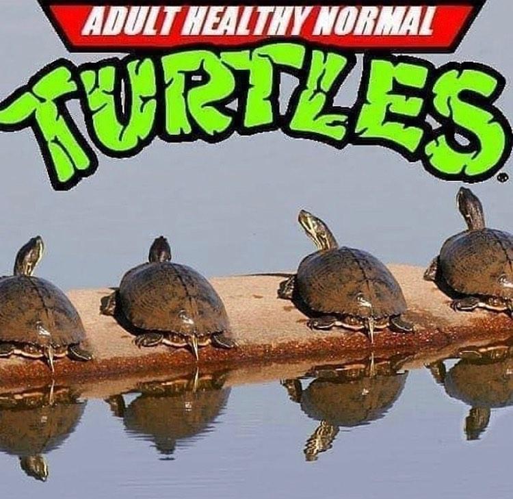 adult healthy normal turtles