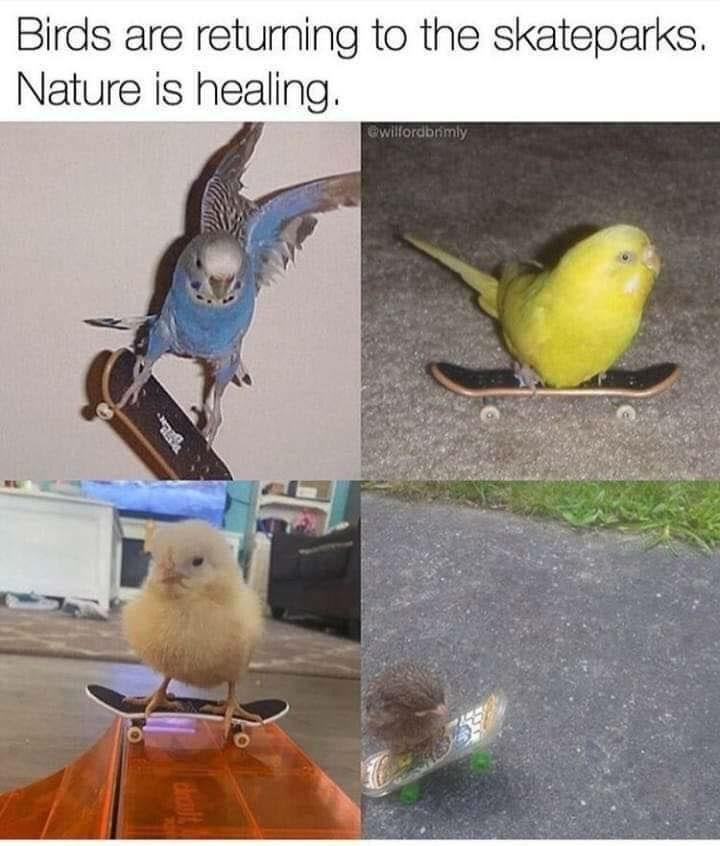 birds are returning to skateparks