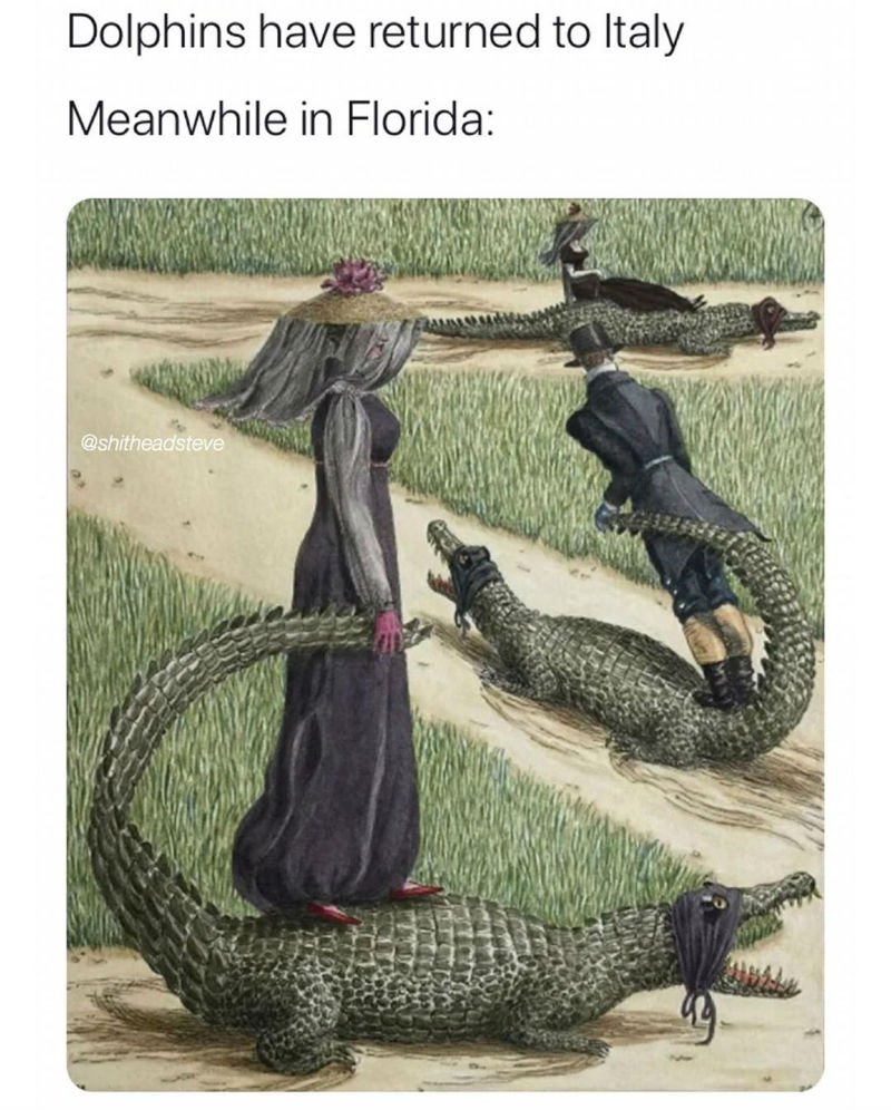dolphins have returned to italy meanwhile in florida meme