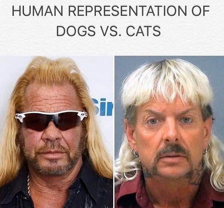 human representation of dogs vs cats