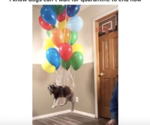 I Know Dogs Can't Wait For Quarantine To End – Up Balloons Tik Tok Video