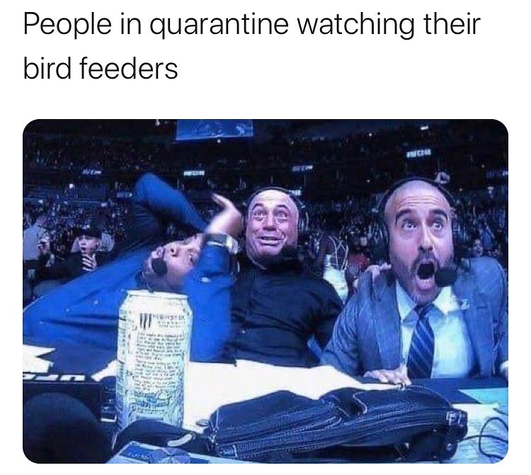 people in quarantine watching their bird feeders meme