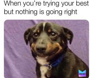 When You're Trying Your Best But Nothing Is Going Right – Dog Meme
