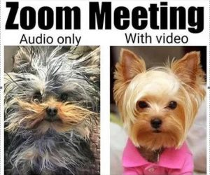 Zoom Meeting Audio Only Vs With Video Meme
