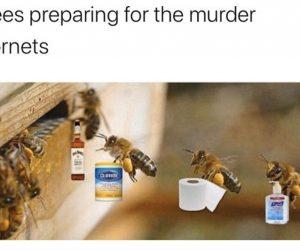 Bees Preparing For The Murder Hornets – Meme