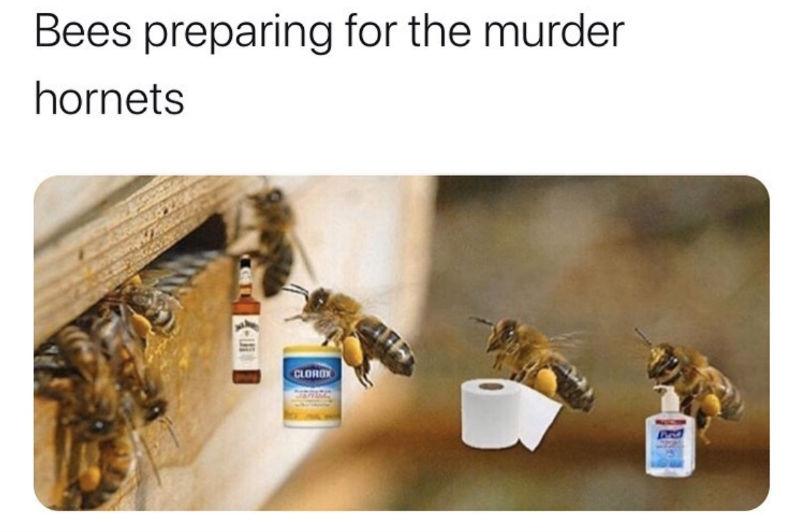 bees preparing for the murder hornets meme