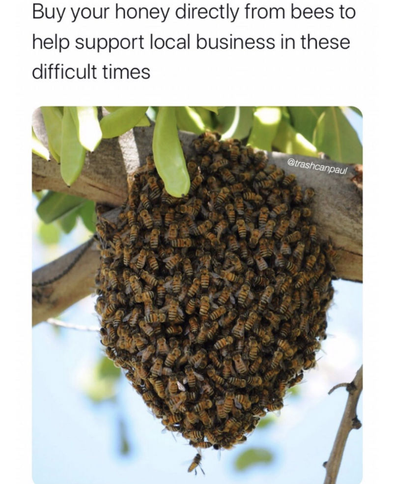 buy your honey directly from bees