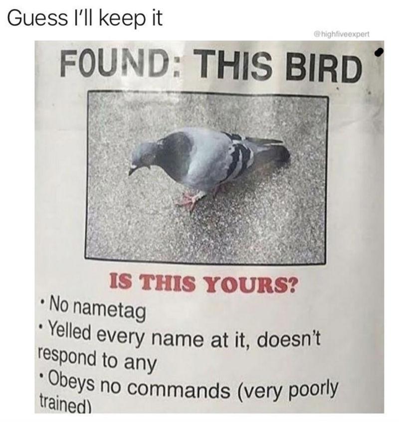 found this bird poster