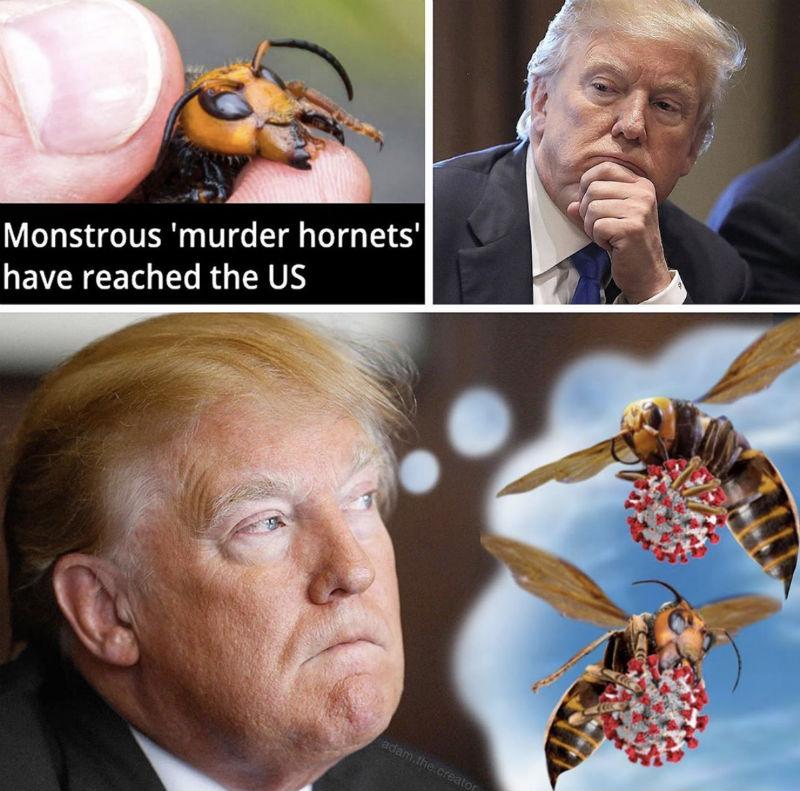 trump murder hornets meme