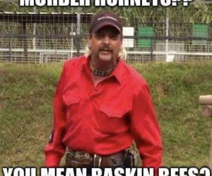 Murder Hornets You Mean Baskin Bees – Meme