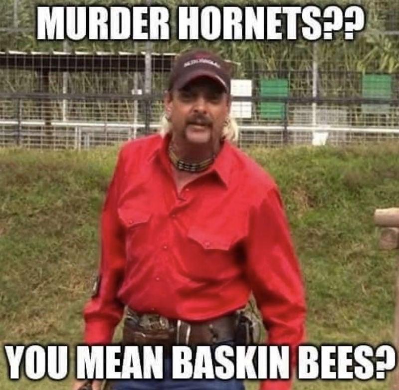 murder hornets you mean baskin bees meme