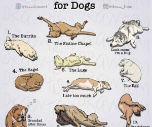 Top Sleeping Positions For Dogs – Comic via @draw_tism
