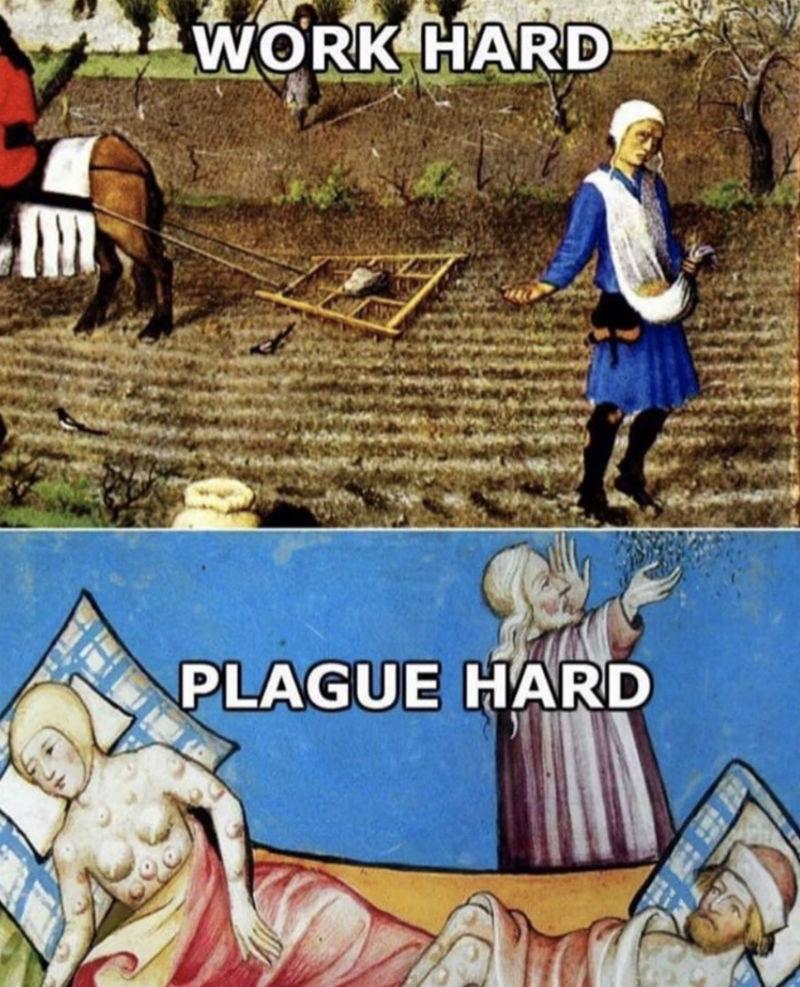 work hard plague hard meme