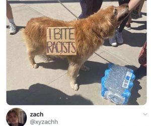 I Bite Racists Dog – Funny Black Lives Matter Protest Signs