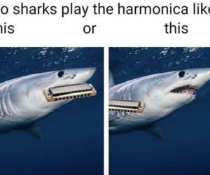 Do Sharks Play The Harmonica Like This Or This – Meme