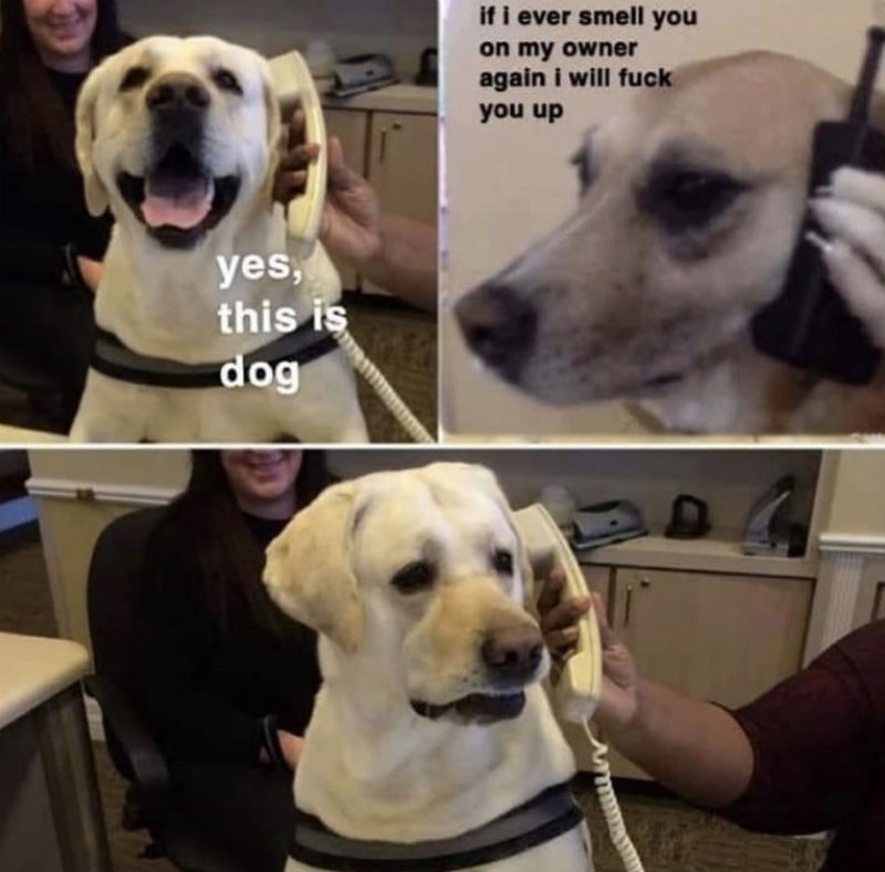 yes this is dog meme