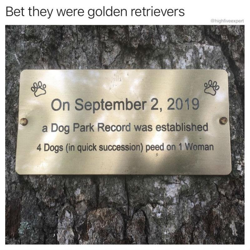 a dog park record
