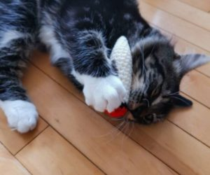 Cat Blunt with Catnip – Turn your cat into Snoop Catt with this Crochet Doobie for Cats!
