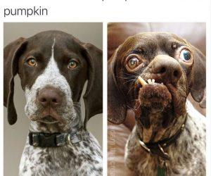 Front Of Halloween Pumpkin Vs Back Of Pumpkin – Meme